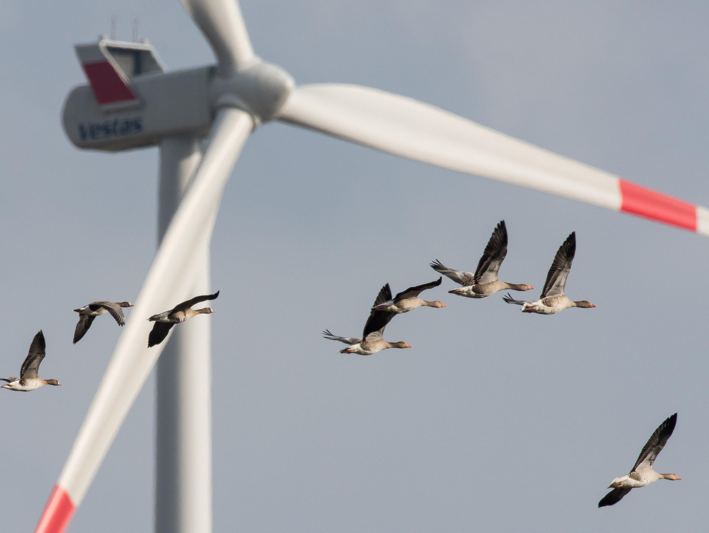 Neuer Rekord bei Windenergie.