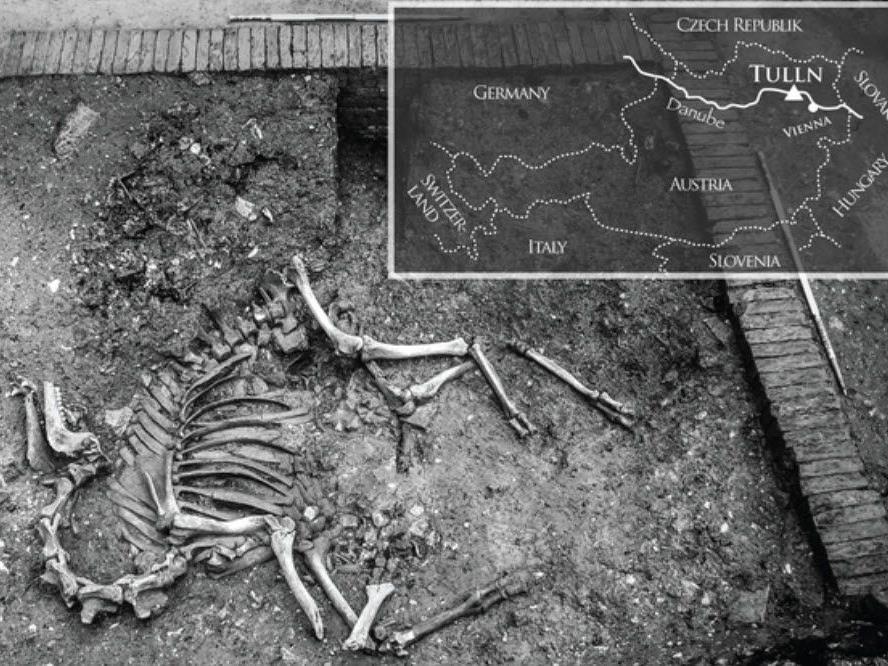 2006 wurde vollständiges Skelett entdeckt - Stammte aus Zeit der zweiten Türkenkriege