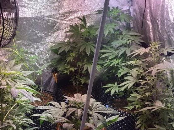 Einsatzkräfte drangen in eine Wohnung in Wien-Penzing ein und stellten 16 Marihuanapflanzen sicher.