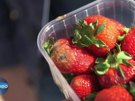 Können angeschimmelte Früchte noch gegessen werden?
