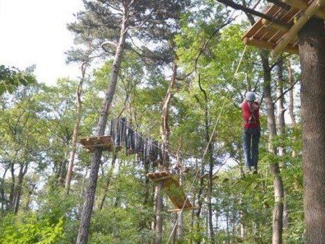 Am 15. Mai 2015 startet die neue Saison im Waldseilpark am Kahlenberg.