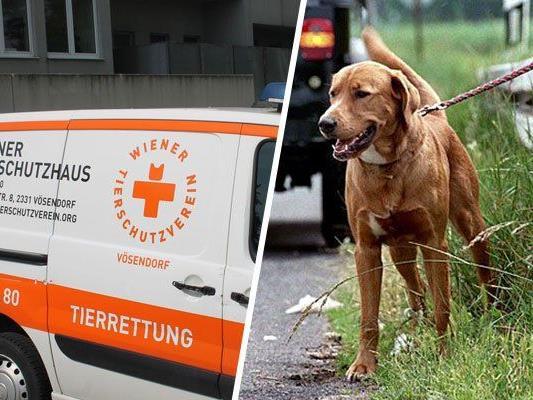 Um ausgesetzte Tiere und sonstige Vierbeiner in Not kümmerte sich bisher die WTV-Tierrettung