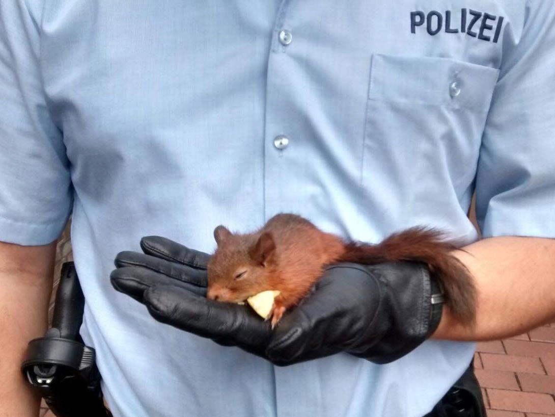 Nach seiner Festnahme musste sich das Eichhörnchen erst einmal erholen