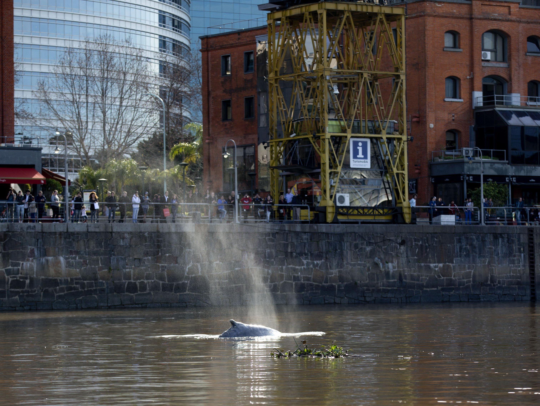 Tier schwamm vor belebtem Viertel von Argentiniens Hauptstadt.