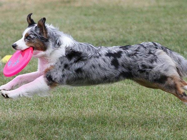 Beim 1. Hundetag in Korneubirg können die Vierbeiner ihr Können beweisen