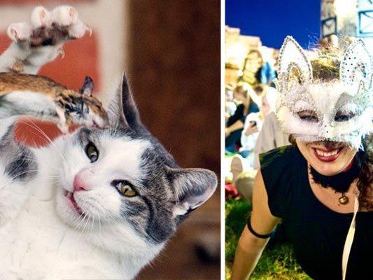 Ganz im Zeichen witziger Katzen steht das Cat Video Festival Vienna in der Arena (r.)