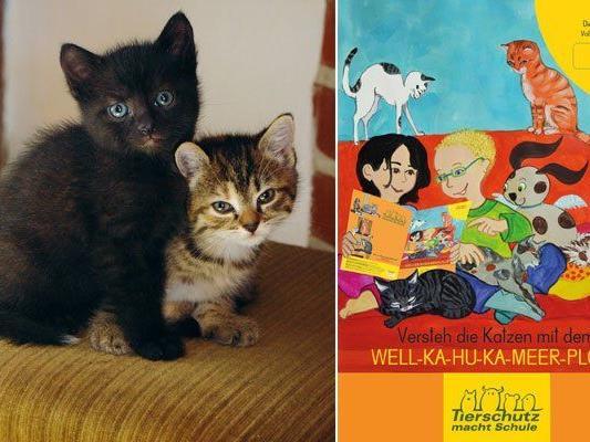 Tierschutz macht Schule verschenkt Katzenwissen zum Weltkatzentag