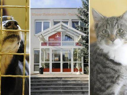Die Schützlinge im Wiener Tierschutzhaus kann man bei Tag der offenen Tür sehen