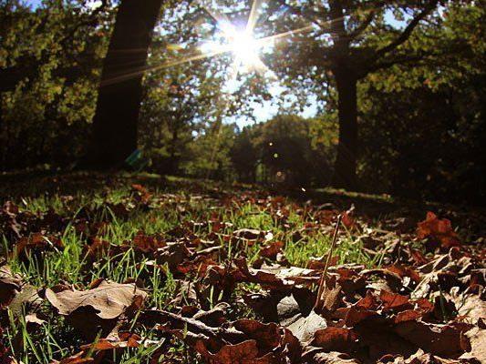 Der Herbst zeigt sich kommende Woche mancherorts von seiner freundlichen Seite