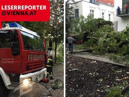 Der umgestürzte Baum führte zu einem Feuerwehreinsatz.