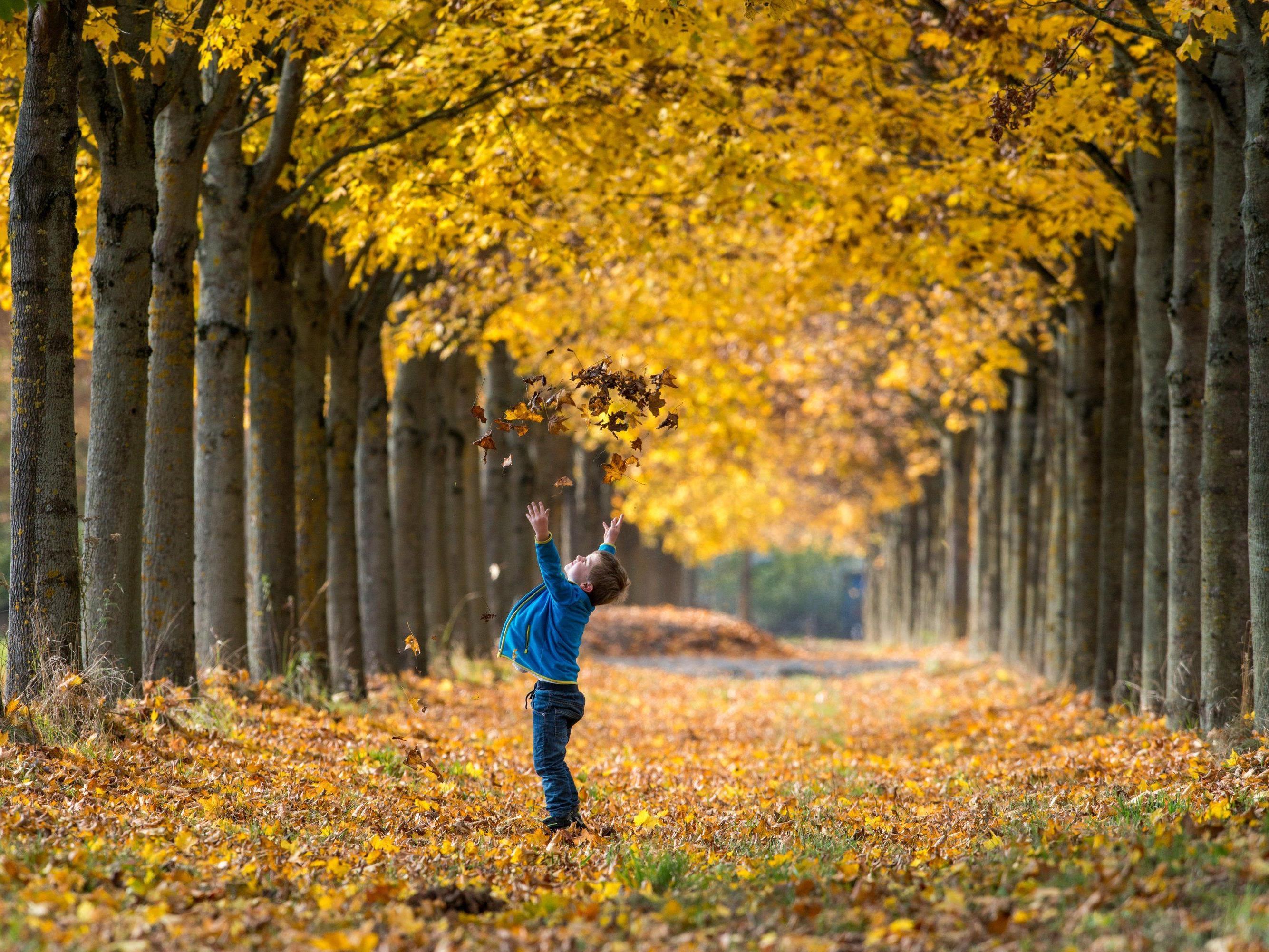 Herbstliche Frühlingsgefühle - Weiterhin äußerst mildes Wetter