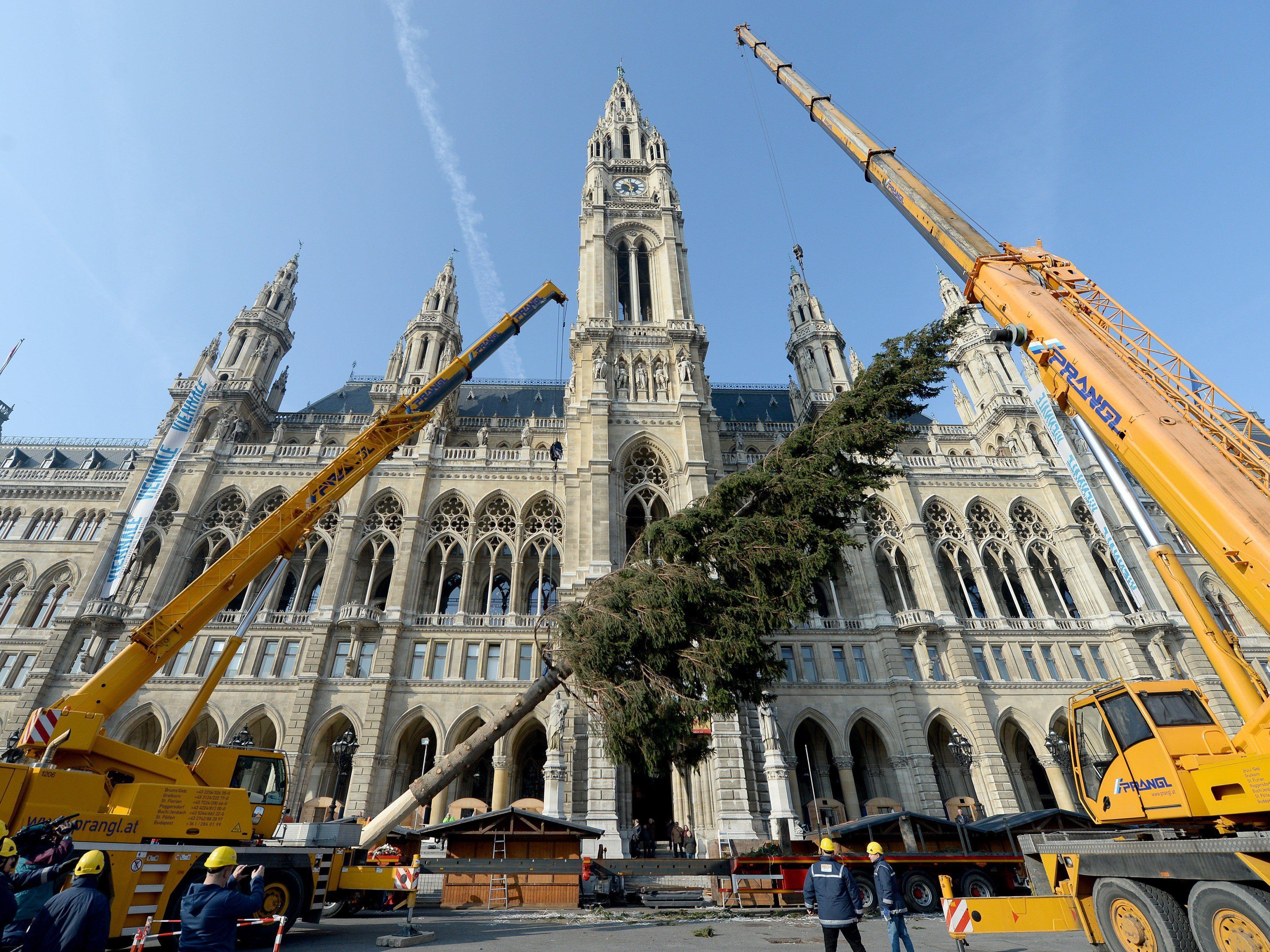 Der Christbaum vor dem Wiener Rathausplatz steht bereits.