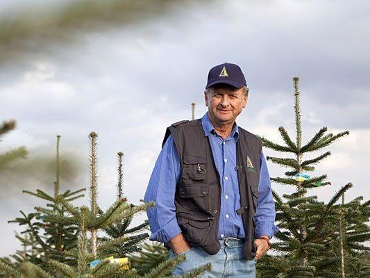 Stolz auf seine Bäume: Franz Raith (Sprecher Österreichische Christbaumbauern)