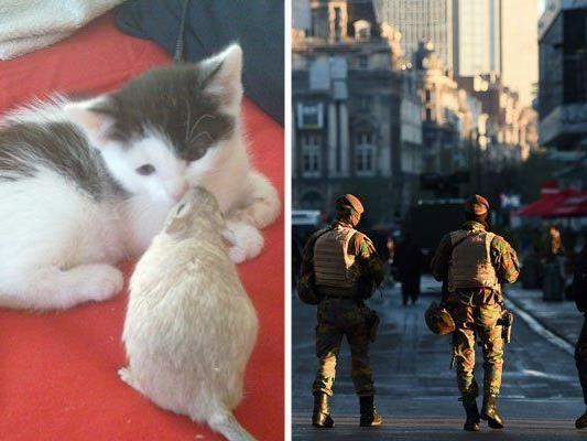 Niedliche Katzen statt Infos zum Polizeieinsatz - die Twitter-Antwort auf den drohenden Terror in Brüssel