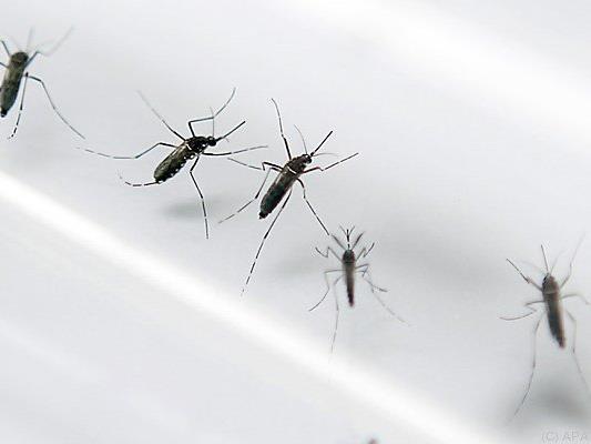 Brutstätten der Stechmücken sollen ausgemerzt werden