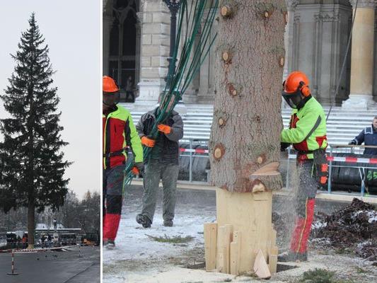 Nach 9.00 Uhr stand der Baum am Rathausplatz nicht mehr.