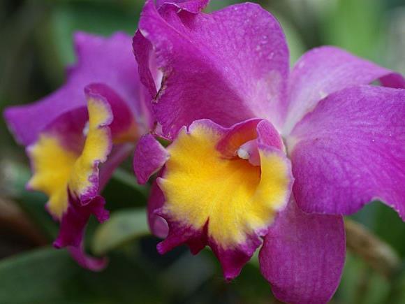 Internationale Orchideenschau vom 20. bis 28. Februar 2016 in den Blumengärten Hirschstetten