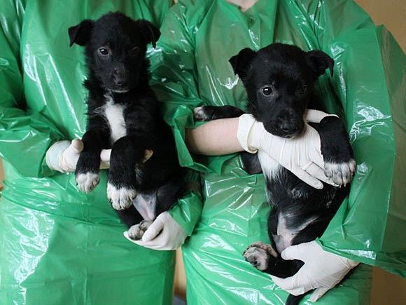 Zwei der fünf Hundewelpen, die ausgesetzt worden waren
