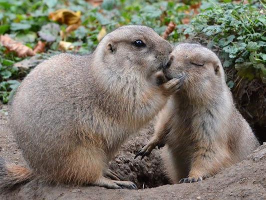 Romantische Gefühle im Tiergarten Schönbrunn.