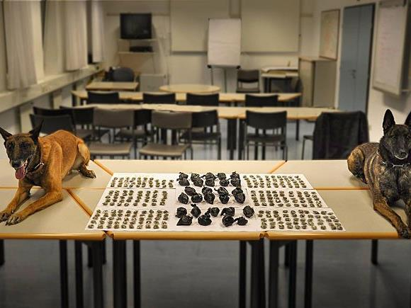 Die Polizeihunde unterstützten die Beamten nach Kräften im Kampf gegen die Drogenkriminalität