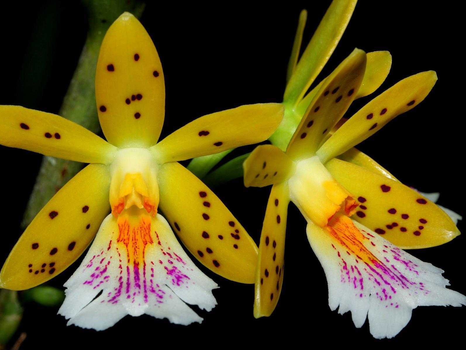 Die Orchidee ist bekannt für ihre schöne Blüte.