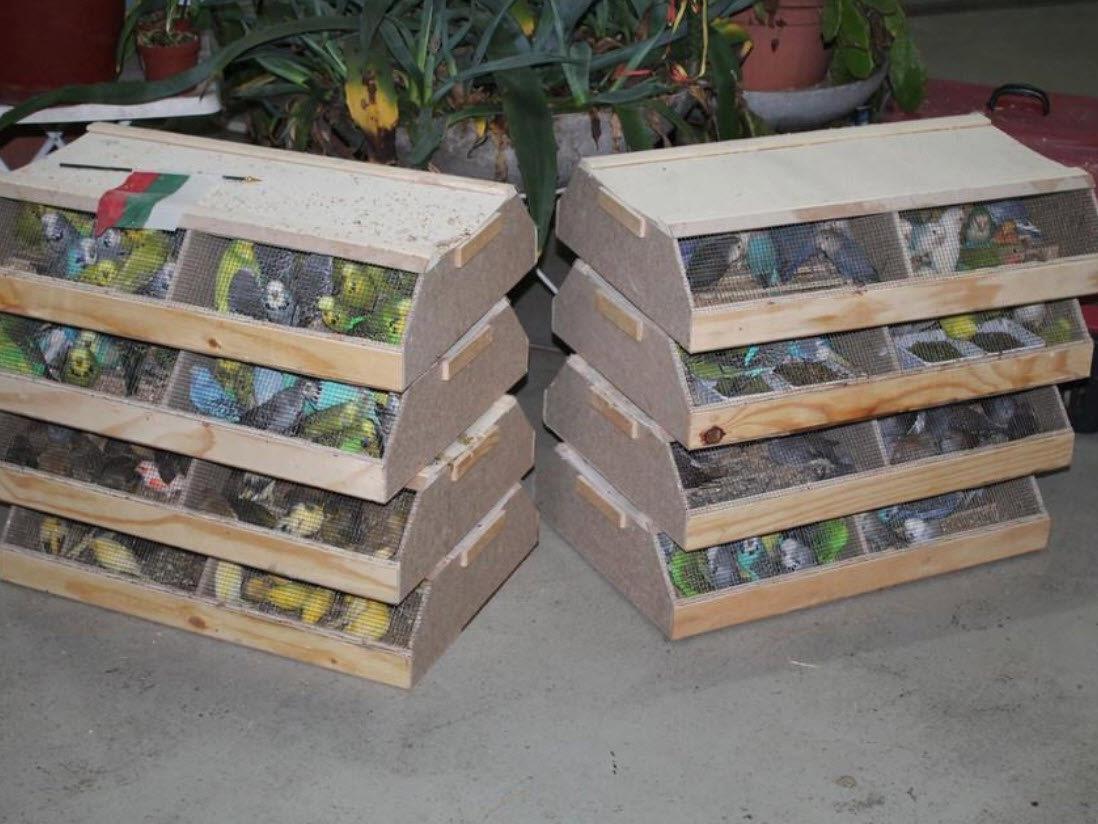 Die beschlagnahmten Vögel bleiben in der Obhut der Wiener Tierschutzvereins