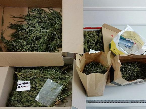 Dieses Cannabiskraut wurde in Himberg sichergestellt