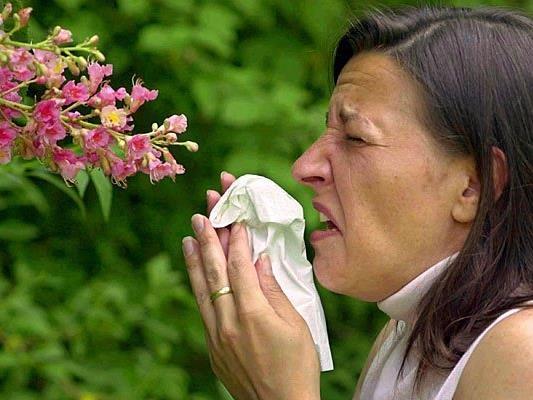 Der Pollenflug macht Allergikern nach dem milden Winter heuer vermehrt zu schaffen