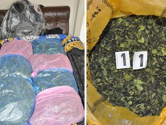 Hunderte Kilogramm der Droge Khat wurden sichergestellt