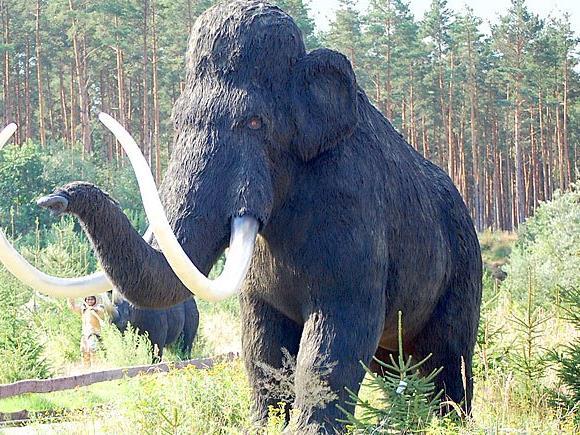 In der Wiener City befand sich einst ein Weidegrund für Mammuts