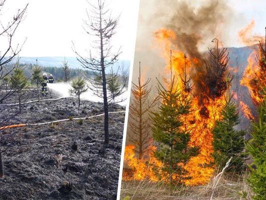 Mehrere Quadratmeter Jungwald brannten im Alpeltal ab.