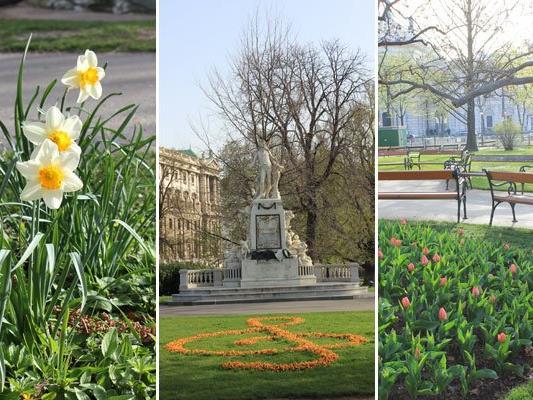 In vielen Wiener Parkanlagen findet man bereits frühlingshafte Blütenpracht.
