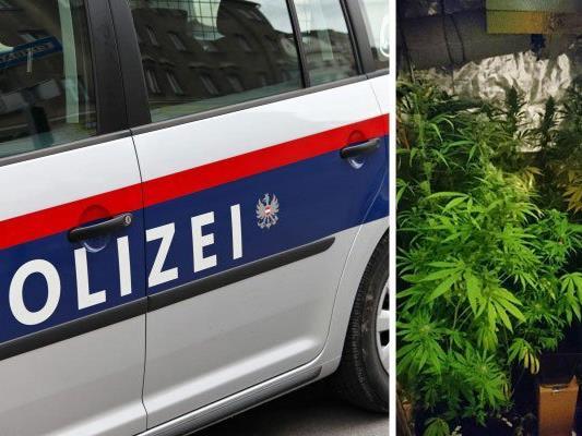 Diese Cannabis-Plantage entdeckten die Einsatzkräfte in Landstraße
