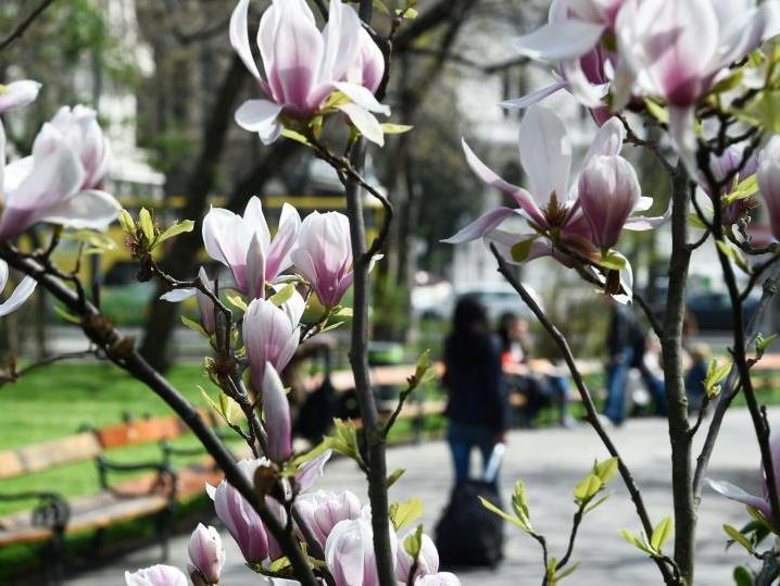 Freundliches Frühlingswetter auch nächste Woche.