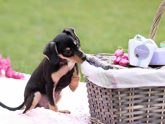 Das 1. Hundepicknick in Wien findet statt