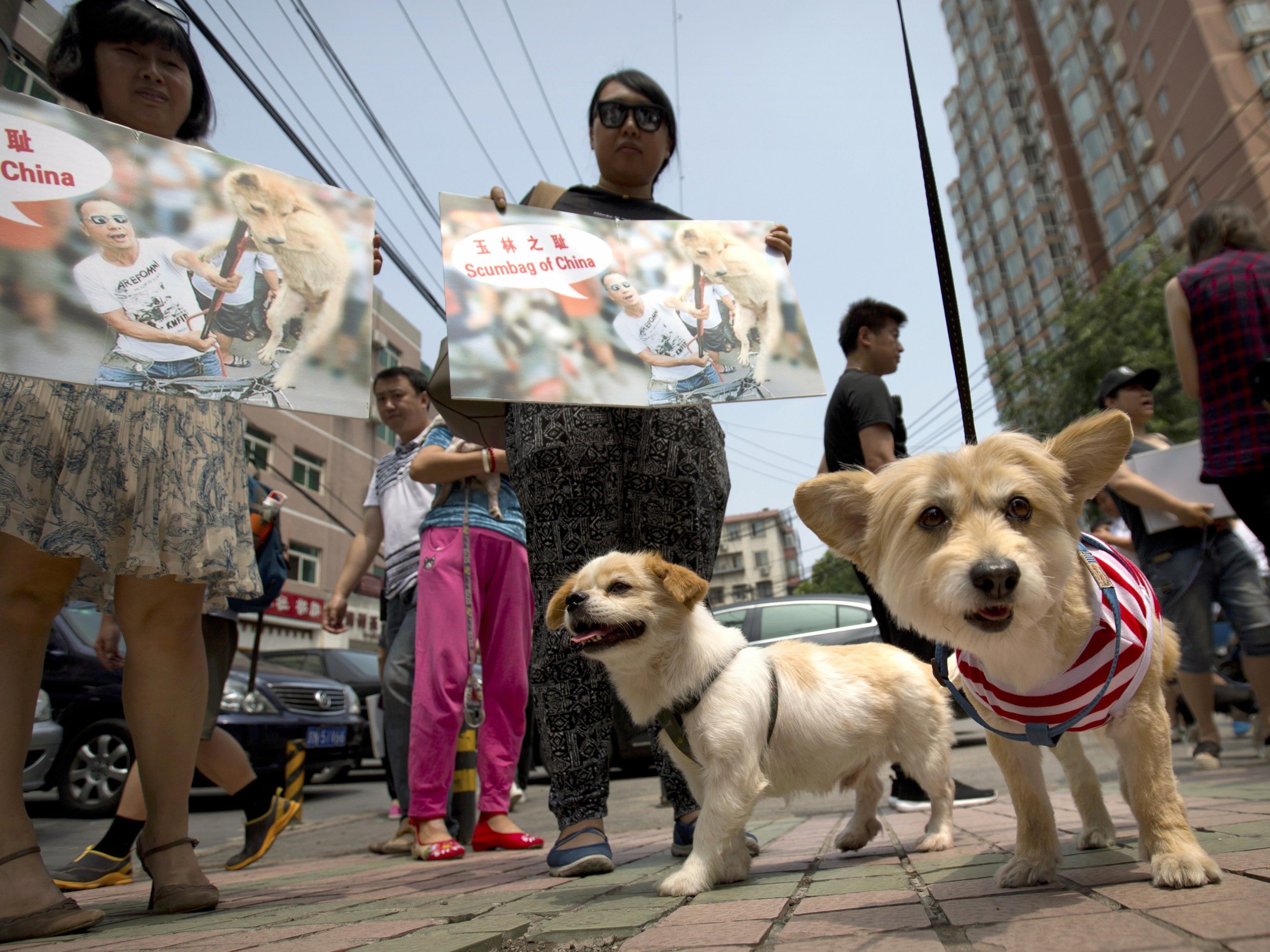 Gegen das Hundefleisch-Festival gab es zahlreiche Proteste.