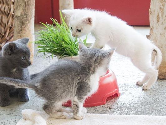 Die geretteten Kitten beim Wiener Tierschutzverein