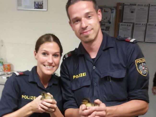 Die Entenküken wurden von der Polizei in Sicherheit gebracht.
