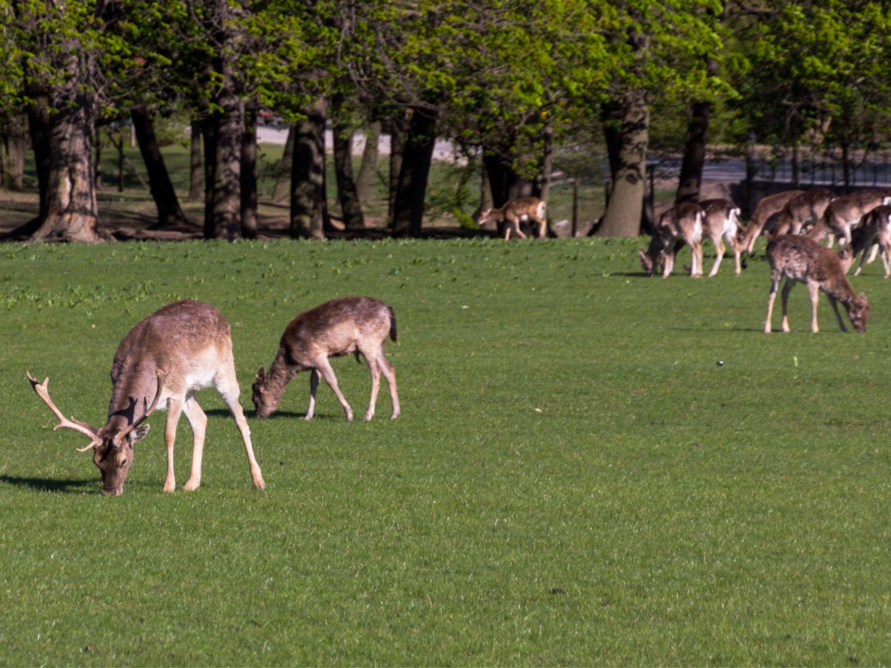 Natürlich sind im Lainzer Tiergarten auch jede Menge Tiere zu sehen.