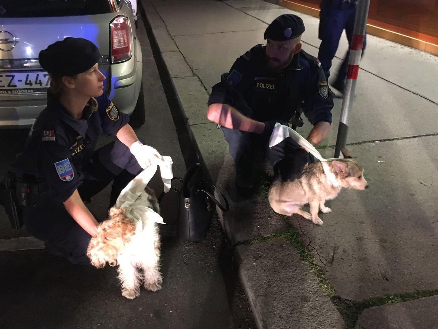 Die Polizisten fingen die beiden Hunde wieder ein