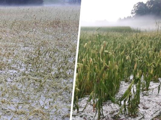 Schwere Unwetter verursachten einen enormen Schaden für die Landwirtschaft.