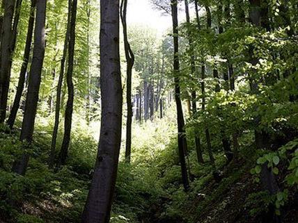 Das Mädchen aus Wien war im Wald verloren gegangen