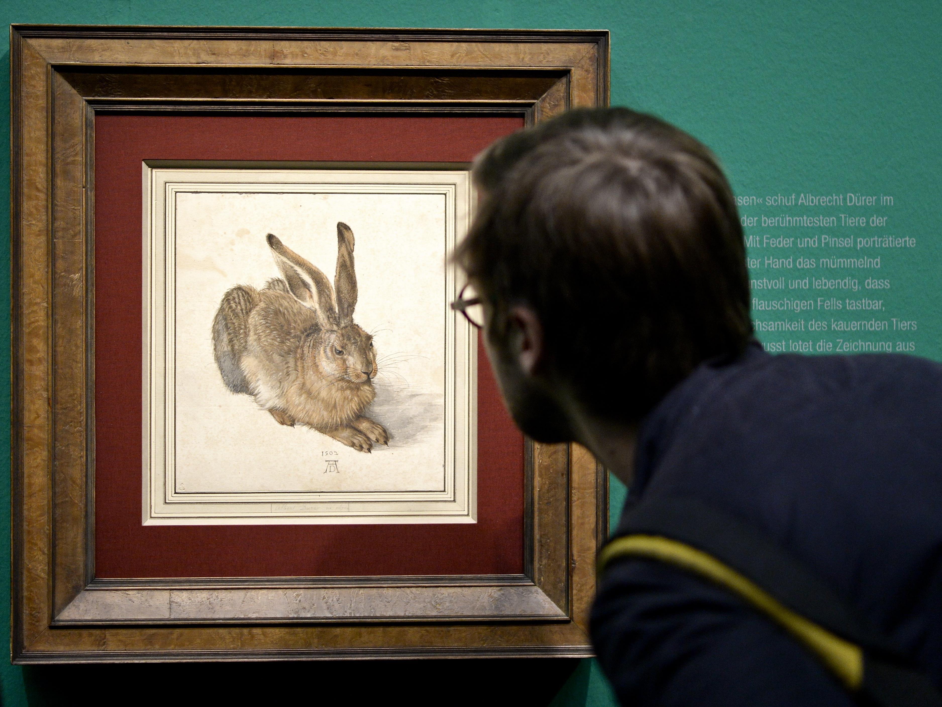 Der Feldhase von Albrecht Dürer kann am 1. Oktober betrachtet werden.