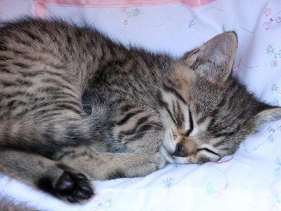 Ein unbekannter Tierquäler hat in Saalfelden eine Katze getötet. (Symbolbild)