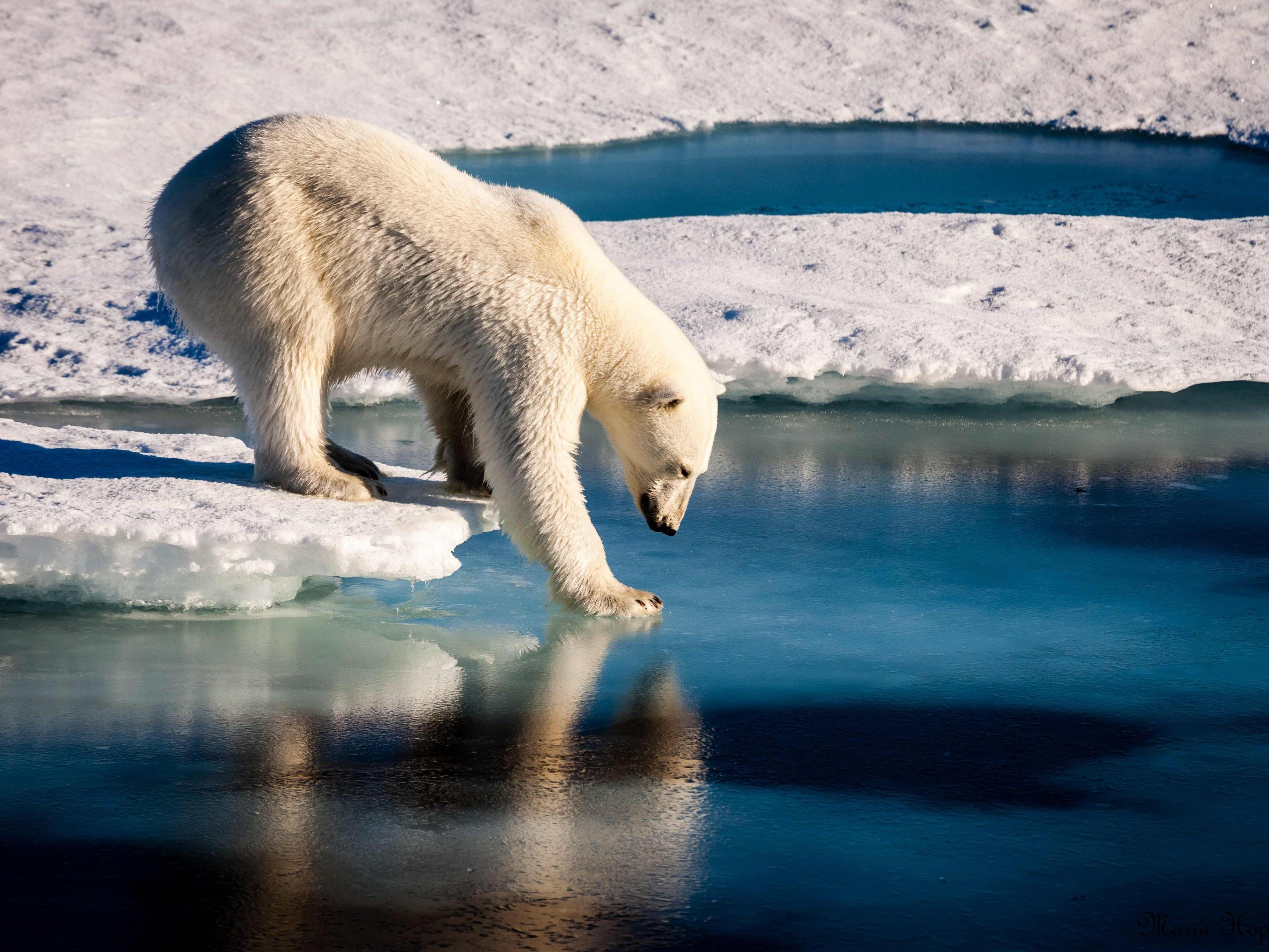 Durch den Klimawandel wird auch der Lebensraum einiger Tierarten zerstört.