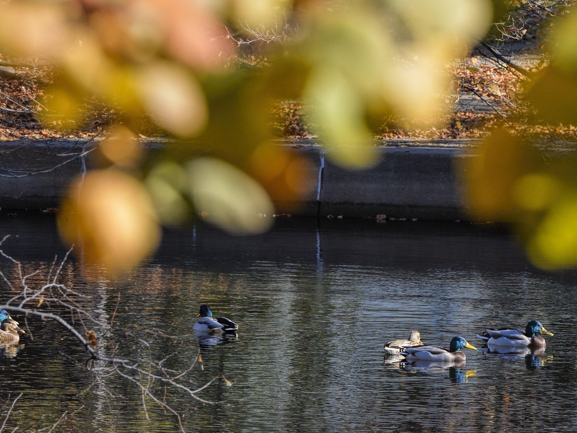 Der Herbst wird zum Ende des Oktobers hin deutlich kälter.