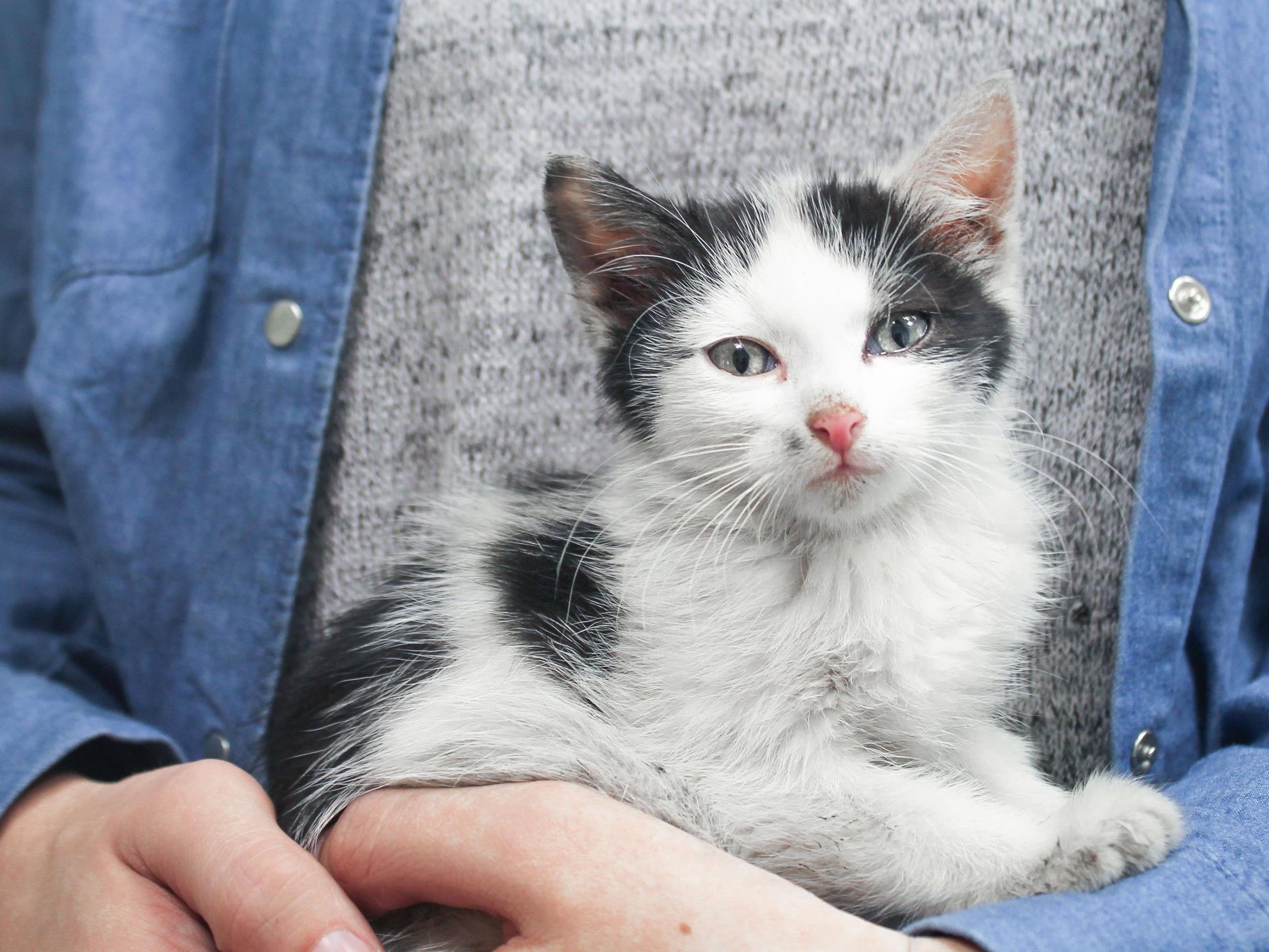 Gerettet und zum Tierschutzverein gebracht: Der kleine Kater Finn
