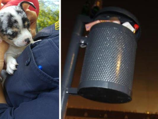 Hundebabys wurden einfach in Mistkübeln entsorgt