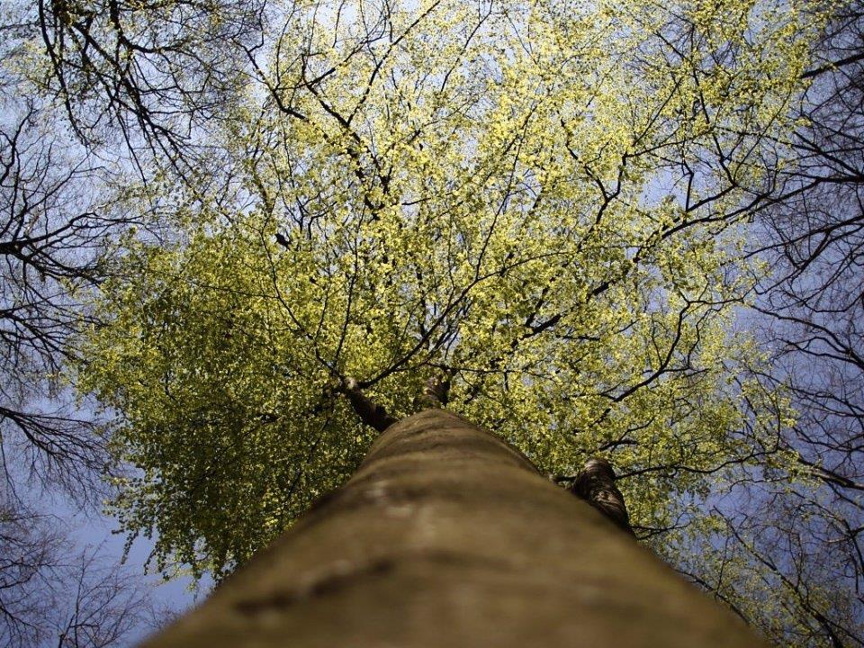 Junge Wiener können am Samstag Bäume pflanzen.