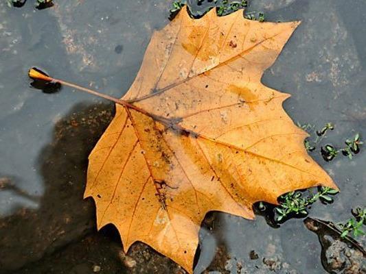 Herbstlich geht es in der nächsten Woche weiter.